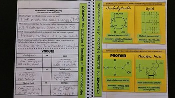 Biomolecule ISNB Foldable and Processing Activity