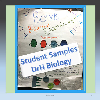 Biomolecule Poster Activity