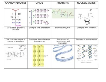 Biomolecule Sort/Interactive notebook activity