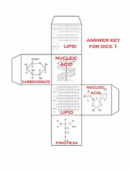 Biomolecules 3D: Carbohydrates, Proteins, Nucleic Acids, and Lipids