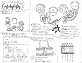 Biomolecules: Carbohydrate coloring sheet