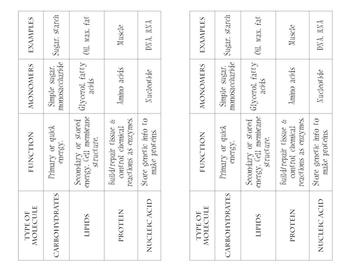 Biomolecules: Card Sort, Handout, Fill-In Diagram/Quiz