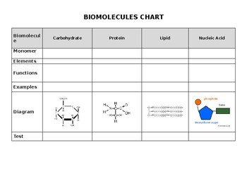biomolecules chart by l4 learning resources teachers pay teachers