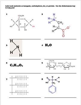 Biomolecules Dichotomous Key - Classifying Organic Molecules