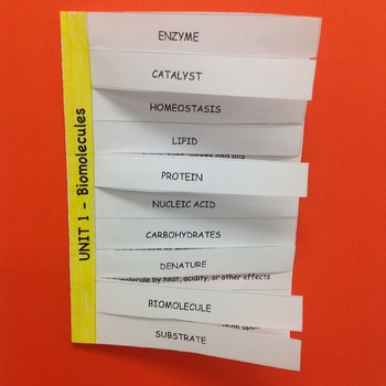 Biomolecules Editable Vocabulary Foldable and Word Wall