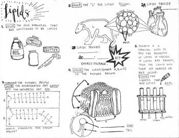 Biomolecules Interactive Notebook Teaching Resources | Teachers Pay ...
