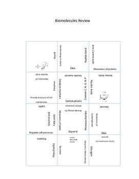 Biomolecules (Macromolecules) Review Puzzle