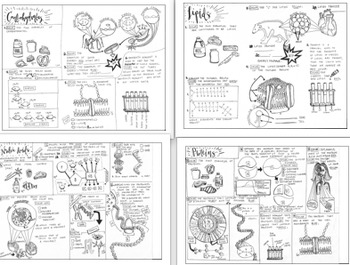 Biomolecules: Nucleic Acid, Carbohydrates, Proteins, and Lipids Coloring sheets