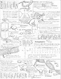 Biomolecules Quick Look Coloring Page