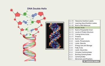 Biomolecules/Macromolecules Online Interactive Animation W
