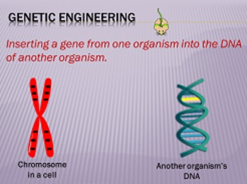 Biotechnology (Genetic Engineering & Cloning) Animated PowerPoint