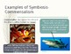 Biotic Interactions (Ecology) Powerpoint Presentation