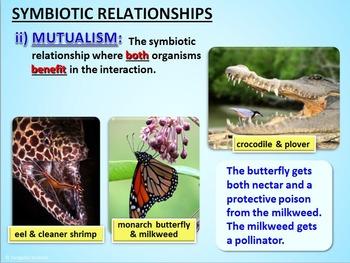 Biotic Interactions - PowerPoint {Editable}