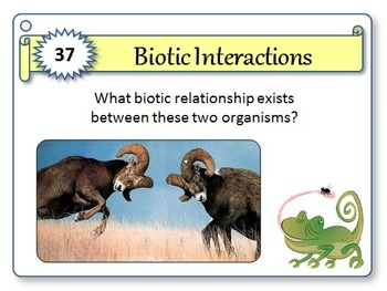 Biotic Interactions - Task Cards {With Editable Template}