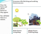 Biotic and Abiotic Factors in Ecosystems