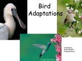 Bird Adaptations