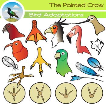 Bird Clip Art ( Adaptations ) - Beaks, Feathers & Feet - 47 piece Set
