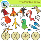 Bird Clip Art ( Adaptations ) - Beaks, Feathers & Feet - 47 piece Set