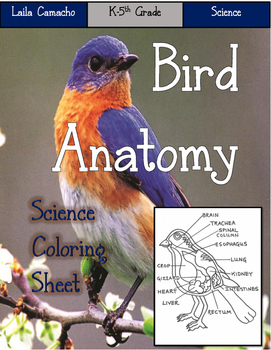 Bird Anatomy Craft
