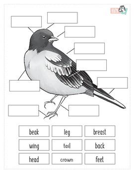 Bird Anatomy Worksheet by A to Zebra | Teachers Pay Teachers