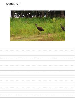 Bird Animal Picture Stories
