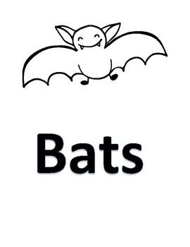 Bird Bat Venn compare diagram Stellaluna Titles only