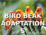 Bird Beak Adapatations