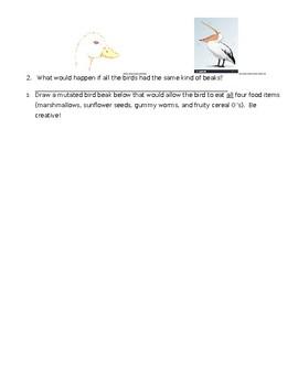Bird Beak Adaptation Lab by Reach the Science Teach | TpT