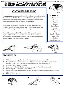 Bird Beak Adaptation Lab (Grades 5-8)