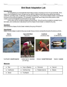 Bird Beak Adaptation Lab -- Middle School