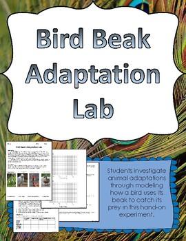 Bird Beak Adaptation Lab Experiment by Kimberly Frazier | TpT
