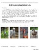Bird Beak Adaptation Lab Experiment