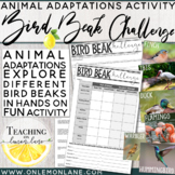 Bird Beak Adaptations Activity Stations (Heredity, Animal Adaptation Game, Lab)