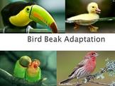 Bird Beak Adaptations Lab