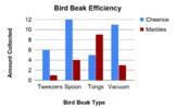 Bird Beak Adaptations Lab Worksheet