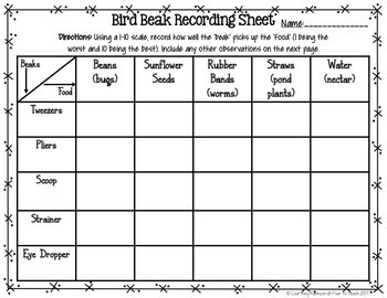 Bird Beak Adaptation Science Activity