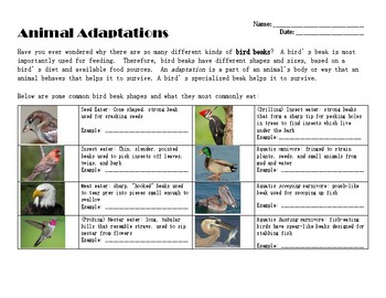 Bird Beak Investigation - Animal Adaptations