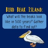 Bird Beak Island: A Natural Selection Scenario