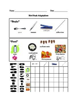 Bird Beak Lab - Adaptations by Jennifer Ruppert | TpT