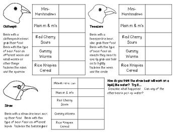 Bird Beak Science Lab - Comparing Different Types of Bird Beaks
