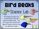 Bird Beak Science Lab - Comparing Different Types of Bird Beaks