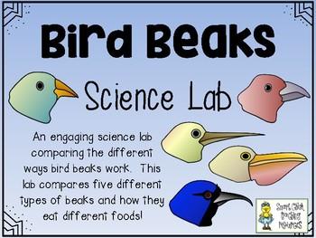 bird beak science lab comparing different types of bird beaks by smart chick. Black Bedroom Furniture Sets. Home Design Ideas