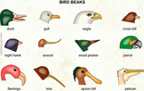 Bird Beak Simulation