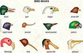 Bird Beak Simulation