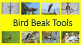 Bird Beak Tools Unit: Graph, Bird Pictures, Bird Beaks,Foo