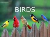 Bird Beak and Feet Adaptations