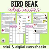 Bird Beaks - Adaptations Activity - PDF & Digital Versions