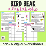 Bird Beaks - Adaptations Activity - Print & Google Versions