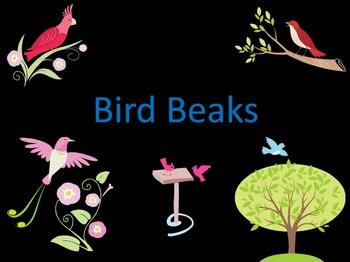 Bird Beaks (PowerPoint)