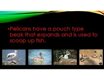 Bird Beaks-information on different types of bird beaks and how they are used.